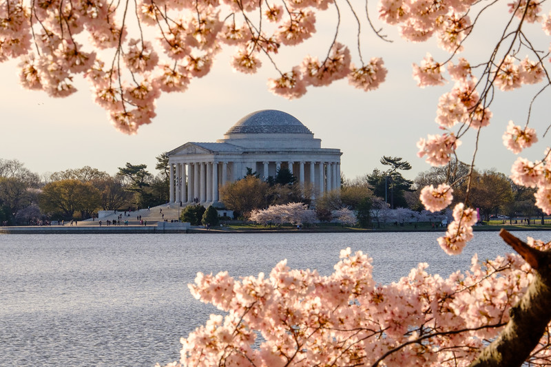 20180408 DC Cherry Blossoms 060