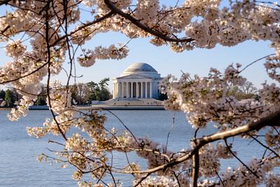 20180408 DC Cherry Blossoms 089
