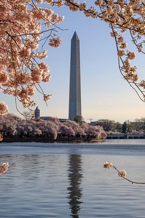 20180408 DC Cherry Blossoms 077