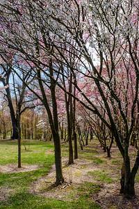 20190406 National Arboretum 032