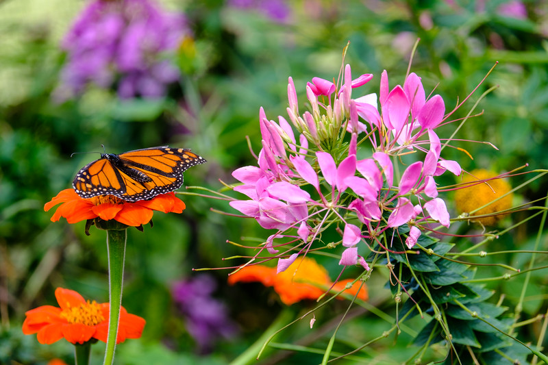 20180909 Coastal Maine Botanical Garden 010