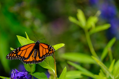 20180909 Coastal Maine Botanical Garden 012