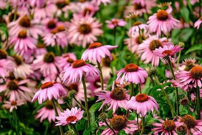 20180909 Coastal Maine Botanical Garden 001