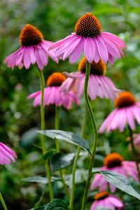 20180909 Coastal Maine Botanical Garden 014