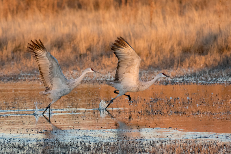 Bosque del Apache National Wildlife Refuge, New Mexico