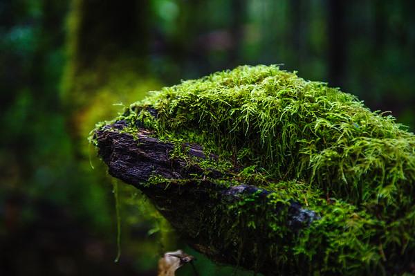 20101108 Redwoods National Park 02