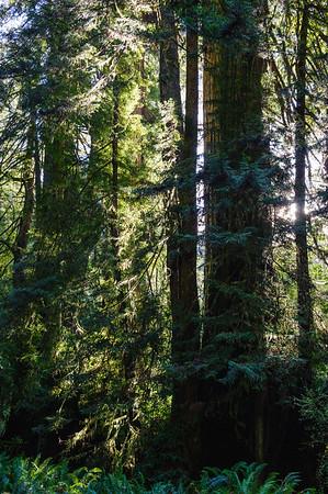 20101108 Redwoods National Park 026