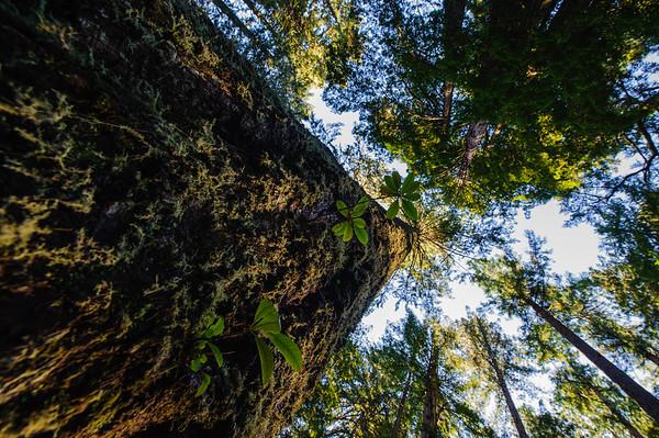 20101108 Redwoods National Park 015