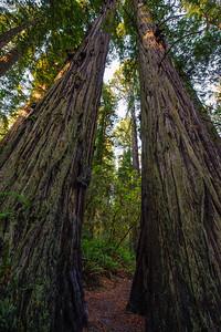 20101108 Redwoods National Park 017