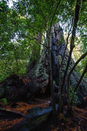20101108 Redwoods National Park 020