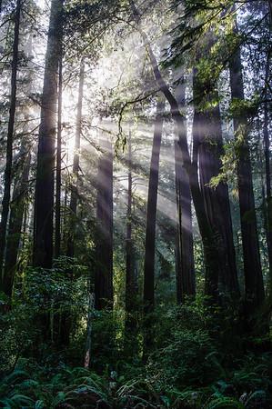 20101108 Redwoods National Park 089-2