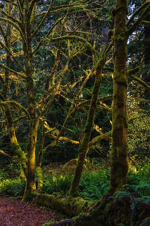20101108 Redwoods National Park 025