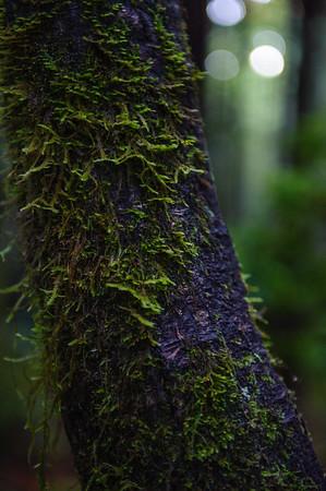 20101108 Redwoods National Park 01