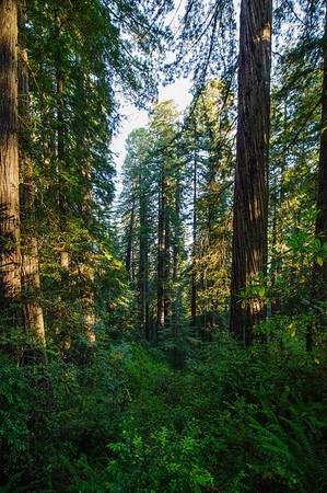 20101108 Redwoods National Park 014