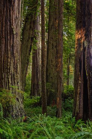 20101108 Redwoods National Park 022