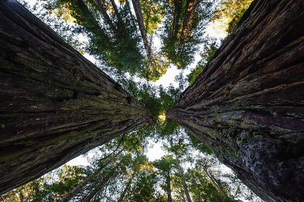 20101108 Redwoods National Park 019