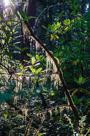 20101108 Redwoods National Park 013