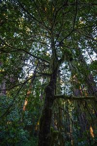 20101108 Redwoods National Park 016