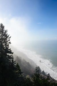 20101108 Redwoods National Park 028