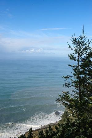20101108 Redwoods National Park 027