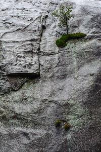 20101110 Yosemite 019