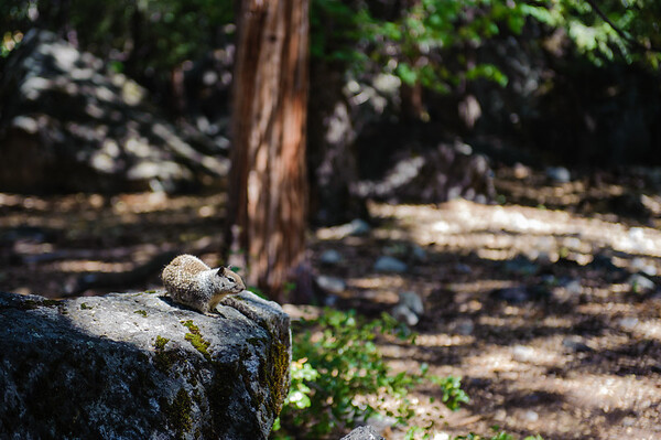 20110718 Yosemite 028