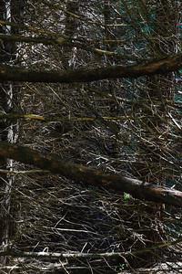 20110718 Yosemite 017