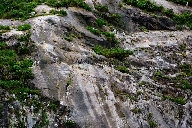 20150724 Glacier NP 016