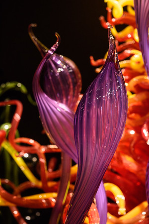 20160824 Seattle Space Needle and Chihuly Garden 063