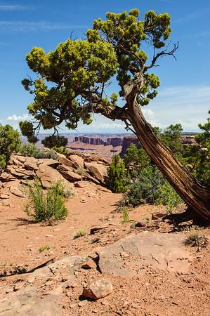 20090602 Canyonlands Needle Overlook 035