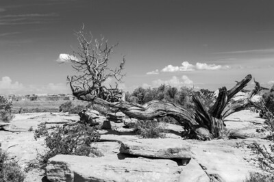 20090602 Canyonlands Needle Overlook 031