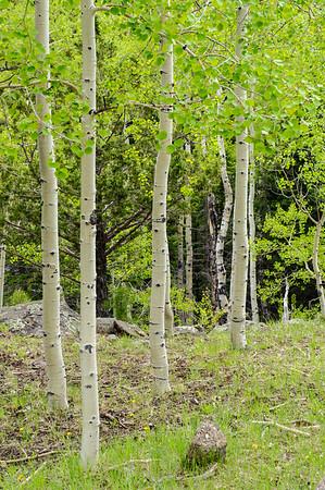 20090603 Scenic Utah 12 019
