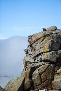 20110710 Rocky Mt NP 057