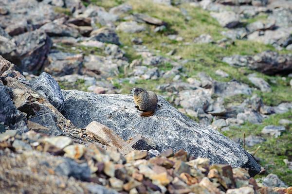 20110710 Rocky Mt NP 062