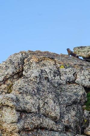 20110710 Rocky Mt NP 046