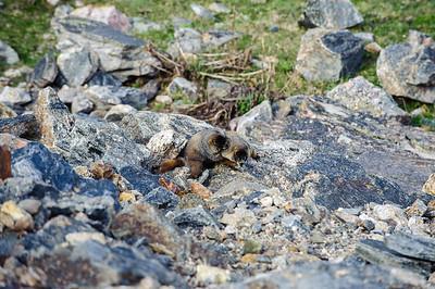 20110710 Rocky Mt NP 069