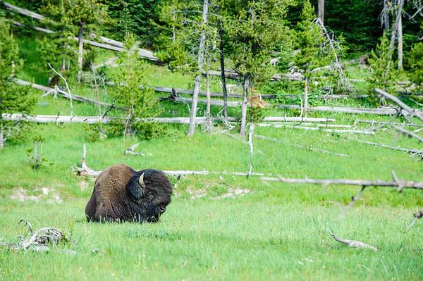 20110712 Yellowstone NP 061