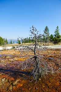 20120913 Yellowstone 039