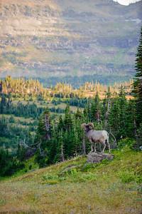 20120914-15 Glacier NP 101