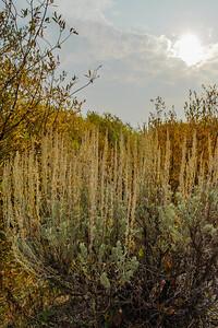 20120916 Idaho 93 003