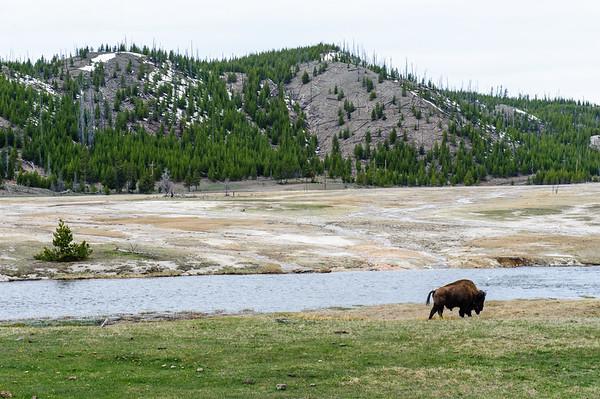 20130511-12 Yellowstone 025