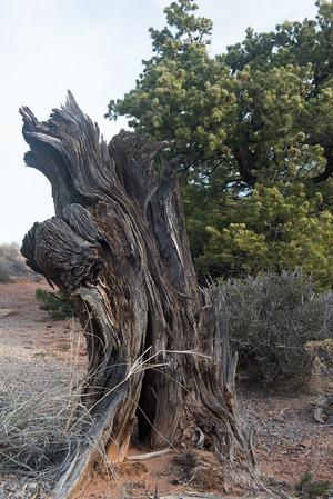 20160313 Canyonlands National Park 124