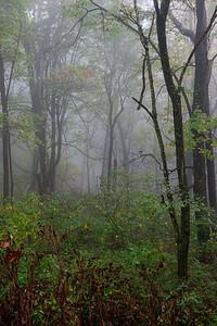 20171014 Shenandoah National Park 051