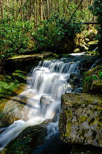 20180504-05 Blackwater Falls State Park 035