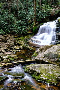 20180504-05 Blackwater Falls State Park 021