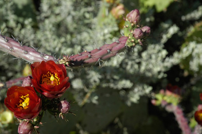 20050428 Westward Look Tucson 011