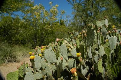20050429 Sabino Canyon027