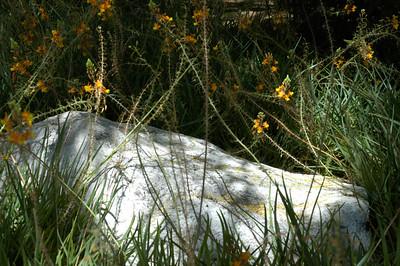 20050429 Sabino Canyon032