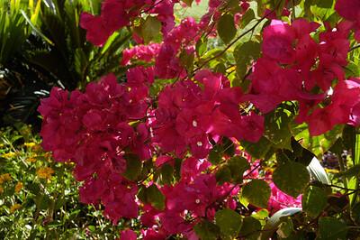 20050428 Westward Look Tucson 046