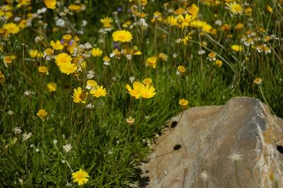 20050429 Sabino Canyon059